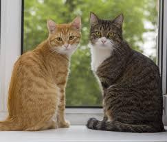 cat pic1