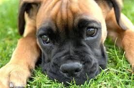 dog pic1
