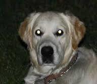 dog see in dark