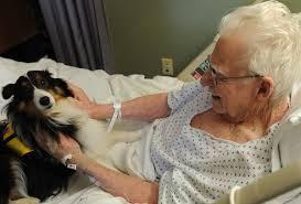 elderly dog pic