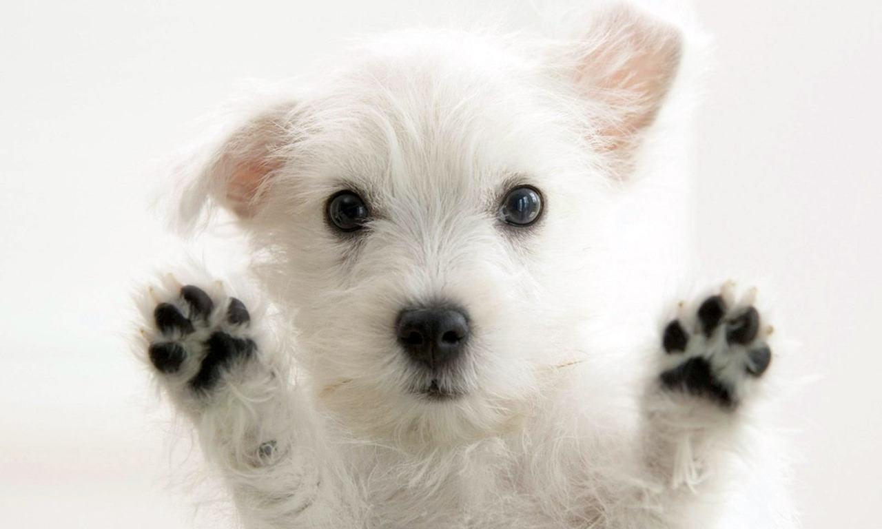 Trendy Dog Names – Bullyfambamblog