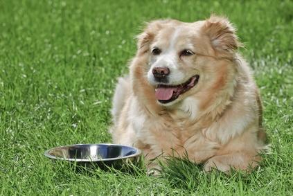 dog-panting-next-to-bowl-grass