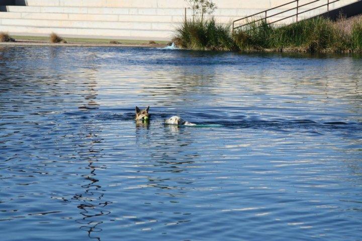 Cosmo-Dog-Park-Lake
