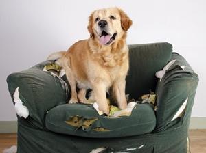 dogchairanxiety