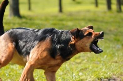 mad-dog