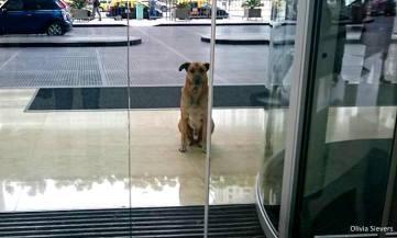 8.8.16-Flight-Attendant-Adopts-Hotel-Dog0