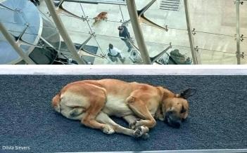 8.8.16-Flight-Attendant-Adopts-Hotel-Dog41