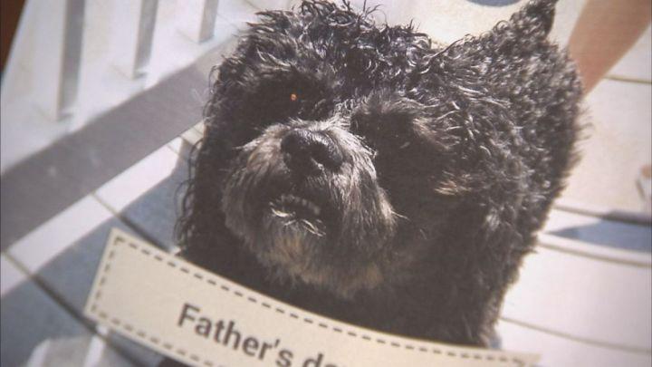 Dog dies groomer1_1471659974807_1886379_ver1.0