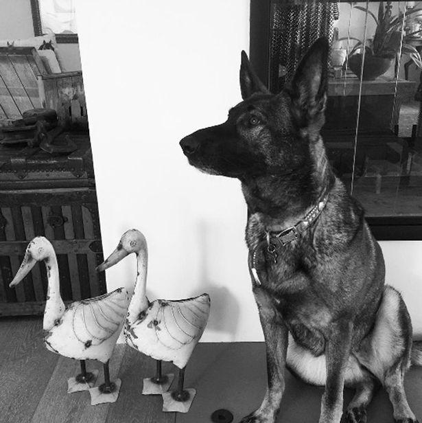 Shannen-Doherty-Dog