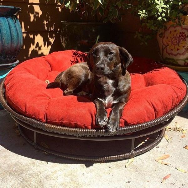 dog-beds-4