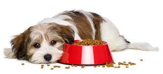 dog-food-4
