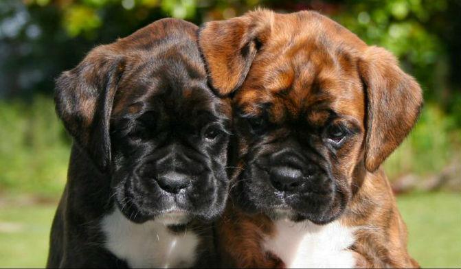 Boxers Pic 2
