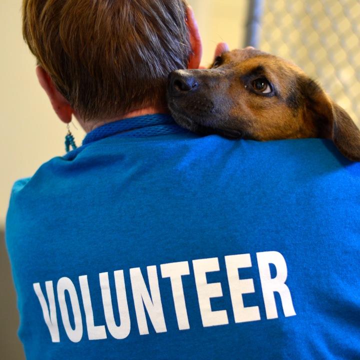 Volunteer Pic 1
