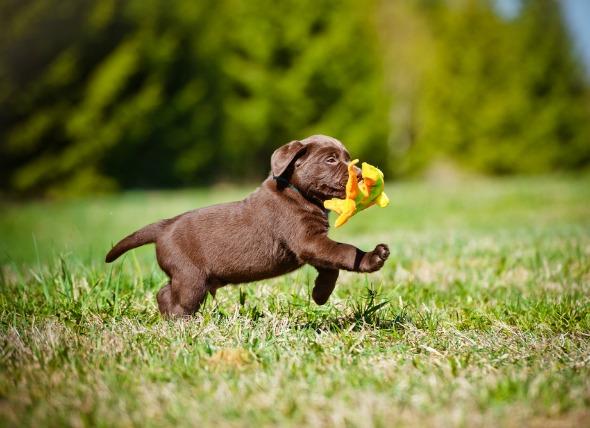 puppy checklist image